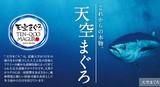 天草2014-6.jpg